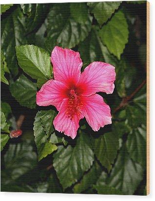 Hibiscus   Wood Print by Elizabeth  Doran