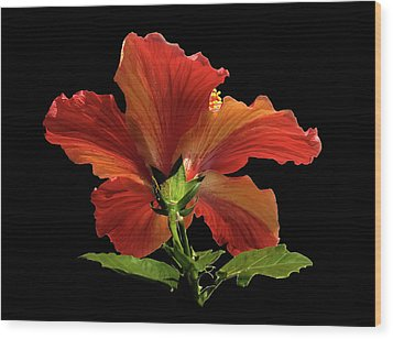 Wood Print featuring the photograph Hibiscus by Geraldine Alexander