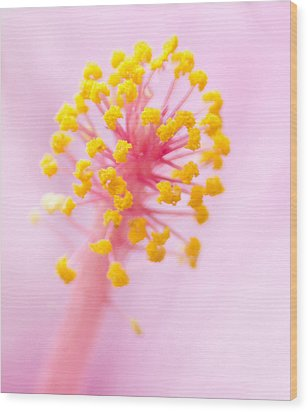 Hibiscus In Pink And Yellow Wood Print by Anne Rodkin
