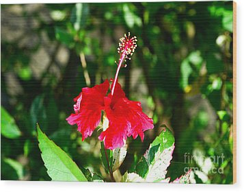 Wood Print featuring the photograph Hibiscus by Pravine Chester