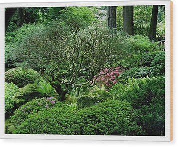 Wood Print featuring the photograph Hiding In A Sea Of Green by Frank Wickham