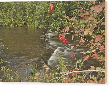 High Bush Cranberry 7823 Wood Print by Michael Peychich