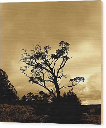 High Country Tree Wood Print by FeVa  Fotos