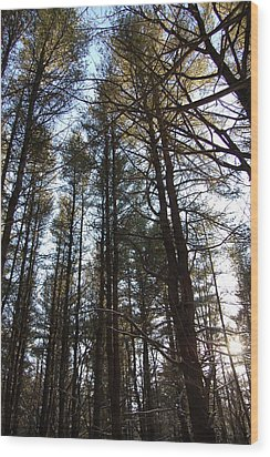 High Pine Forest Wood Print by Jesse Phillips