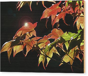 Highlighting The Season Of Fall 2 Wood Print by Cindy Wright