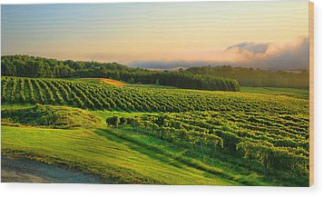 Hill-top Vineyard Wood Print by Steven Ainsworth