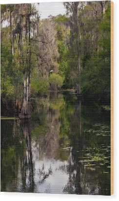 Wood Print featuring the photograph Hillsborough River In March by Steven Sparks