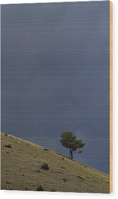 Wood Print featuring the photograph Hillside Tree by J L Woody Wooden