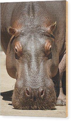 Hippopotamus Wood Print by Ernie Echols