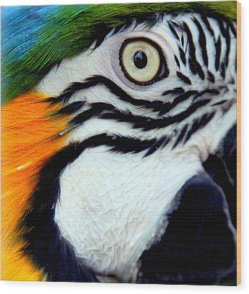His Watchful Eye Wood Print by Karen Wiles