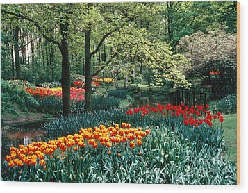 Holland Kuekenhof Garden Wood Print by Dale P Hanson and Photo Researchers