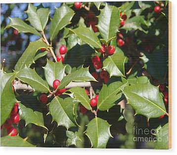 Holly 3 Wood Print by Rod Ismay