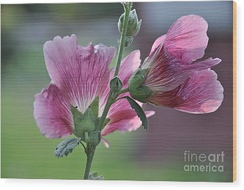 Wood Print featuring the photograph Hollyhocks by Tamera James