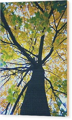 Homage To Georgia O'keefe Wood Print by Todd Sherlock
