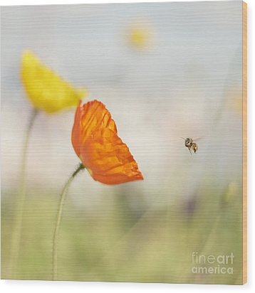 Honey Bee And Colorful Poppies Wood Print