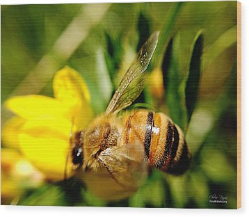 Honey Bee Wood Print by Chriss Pagani
