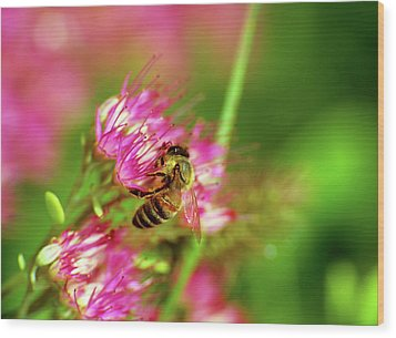 Honey Bee Lands Wood Print