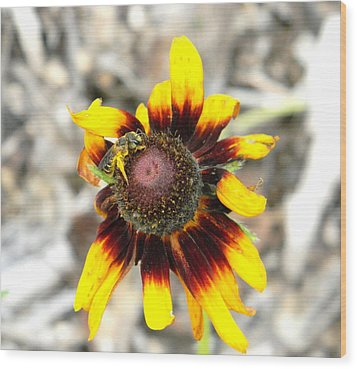 Wood Print featuring the photograph Honey Bee On Yellow Daisy by Jodi Terracina