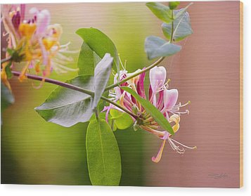 Honey Suckle Flower Wood Print