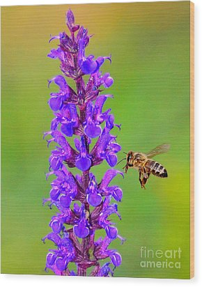 Honeybee N Blooms Wood Print