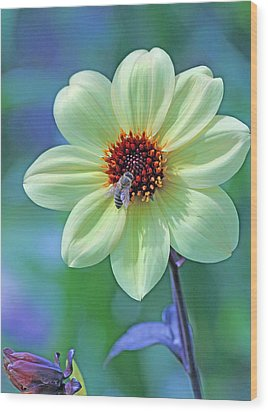 Honeybee On Yellow Flower Wood Print by Becky Lodes