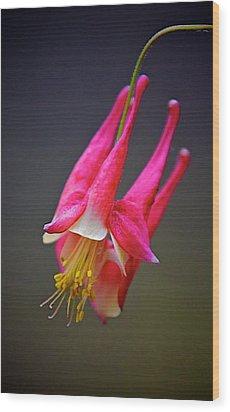 Wood Print featuring the photograph Honeysuckle by Joe Urbz