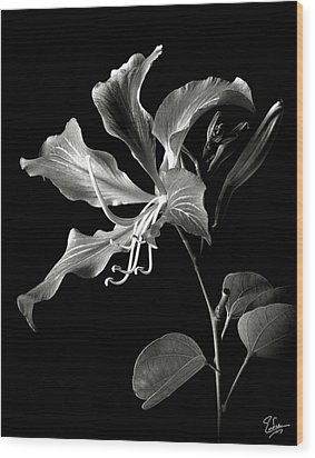 Hong Kong Orchid In Black And White Wood Print