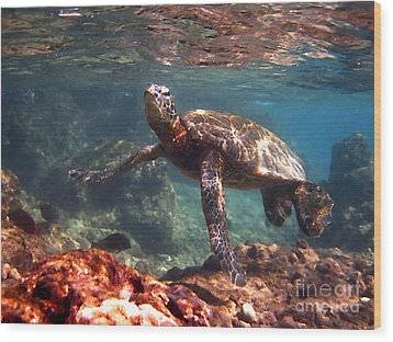 Honu In The Shallows Wood Print