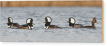 Hooded Mergansers Wood Print by Mircea Costina Photography