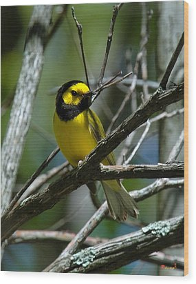 Wood Print featuring the photograph Hooded Warbler Dsb166  by Gerry Gantt