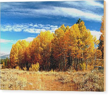 Hope Valley Aspens Wood Print by Michael Courtney