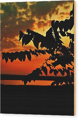 Horicon Marsh At Sunset Wood Print by Alisha Luby