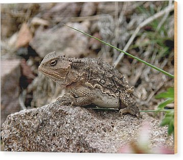 Horned Toad Wood Print by FeVa  Fotos