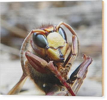 Wood Print featuring the photograph Hornet by Chad and Stacey Hall