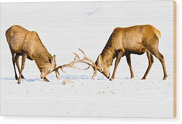 Horns A Plenty Wood Print by Cheryl Baxter