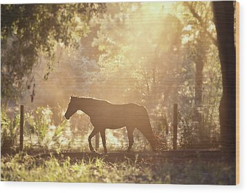 Horse Backlit At Sunset Wood Print by Seth Christie