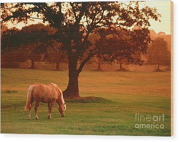 Horse Wood Print by Carl Purcell and Photo Researchers