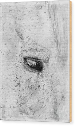 Horse Eye Wood Print by Darren Fisher
