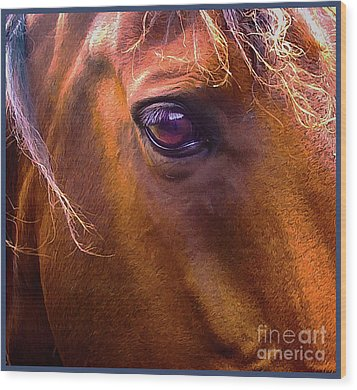 Horse Eyes Wood Print