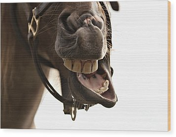 Horse Humour Wood Print by Heather Swan