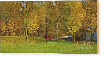 Horse In Autumn Wood Print by Kathleen Struckle