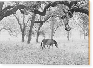 Wood Print featuring the photograph Horse In Foggy Field Of Oaks by CML Brown