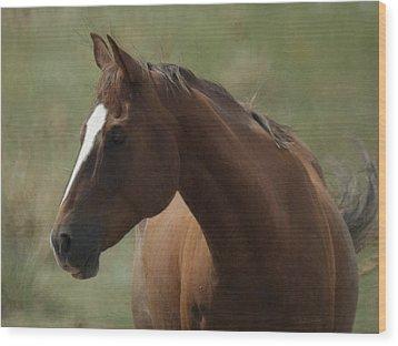 Horse Painterly Wood Print by Ernie Echols
