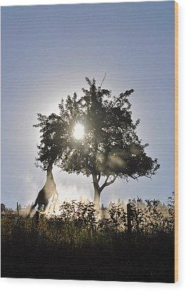 Horse Reaching For Apples Wood Print