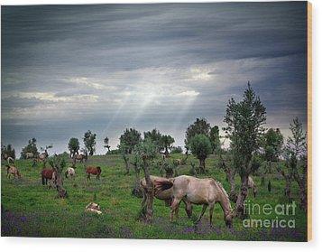 Horses Eating Wood Print by Carlos Caetano