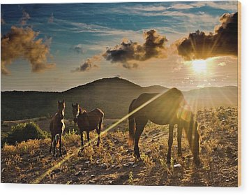 Horses Grazing At Sunset Wood Print by Finasteride