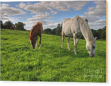 Horses Grazing Wood Print by Rob Hawkins