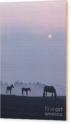 Horses In Kentucky Wood Print by Frederica Georgia and Photo Researchers