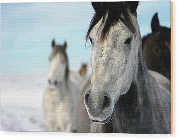 Horses In The Snow Wood Print by Lori Andrews