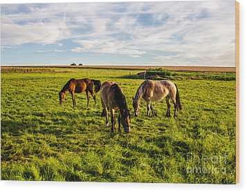 Horses In The Sunset Wood Print by Bodo Herold